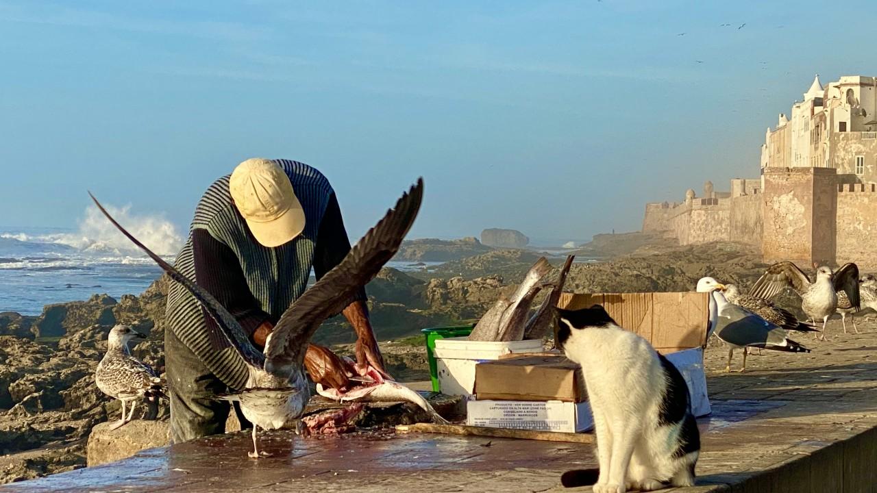 Błękitna Essaouira
